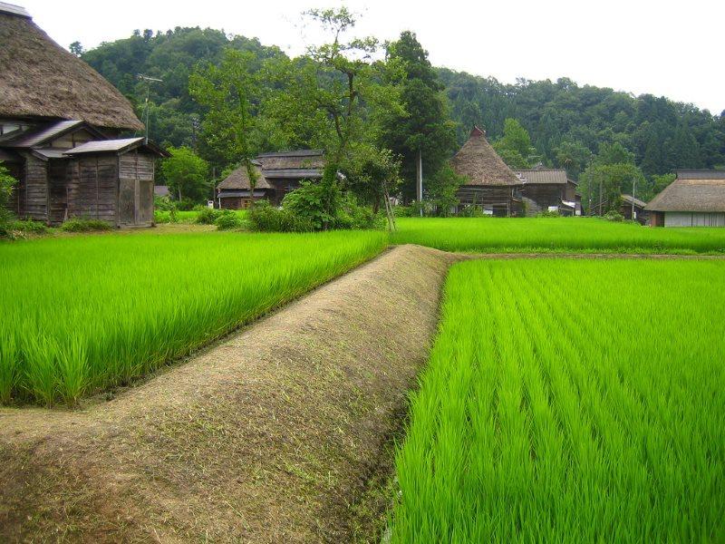 Рисовые поля в Японии