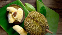 Загадочный дуриан: раскрываем секреты фрукта со зловонным запахом