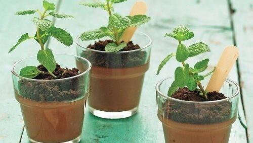 Шоколадный пудинг в горшочках / 植木鉢風チョコプリン