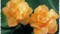 Украшение блюд - цветы из моркови