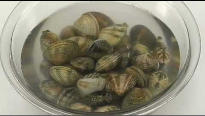 Обработка моллюсков (ракушек)