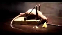 Супер смешная реклама про сыр