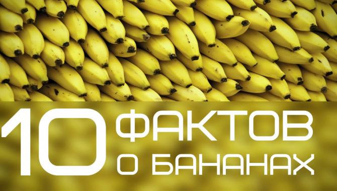 10 фактов, которые вы не знали о бананах