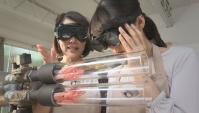 Скоростное приготовление креветок - Видео