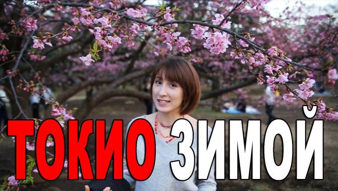 Влог из Токио: зимняя сакура и День Святого Валентина в Японии