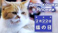 День Кошки в Японии - Видео