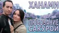 Ханами - любование сакурой- Видео
