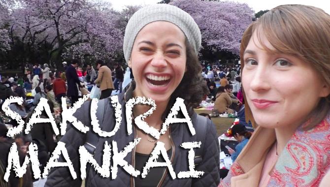 Цветение сакура в Токио Mankai! Sakura Bloom - Видео