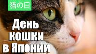 День Кошки в Японии (Видео)