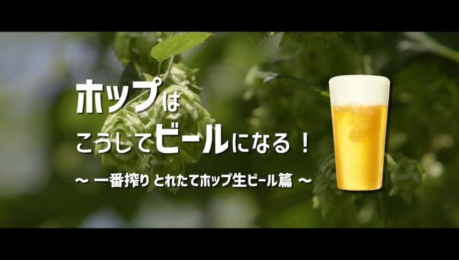 Производство пива Kirin из хмеля - Видео