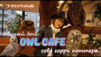 Cовиное кафе в Японии (Видео)