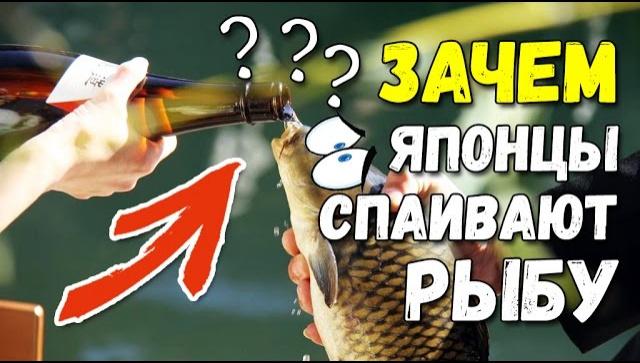 Зачем японцы спаивают рыбу (Видео)