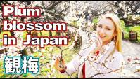 Япония. Любование цветением сливы (Видео)