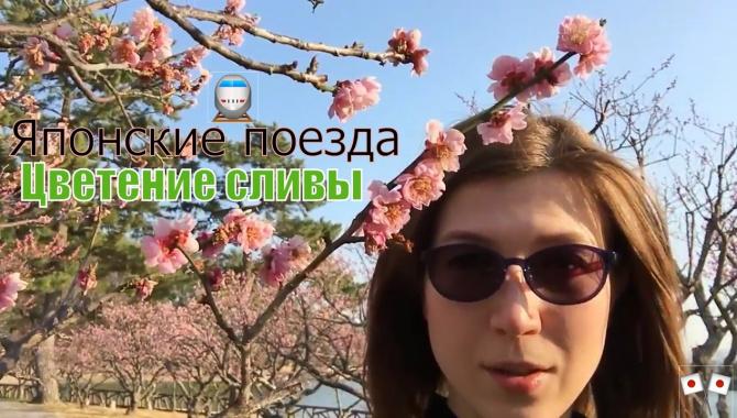 Япония. Цветение сливы. Старые поезда (Видео)
