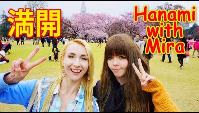 Япония. Полное цветение сакуры (Видео)