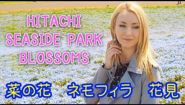 Великолепные цветения в парке Hitachi Seaside Park (Видео)
