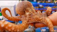 Корейская уличная еда - гигантские осьминоги (Видео)