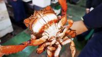 Японская уличная еда - Лягушачий краб (Видео)