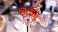 Амэдзаику — традиционное японское искусство изготовления леденцов в форме животных (Видео)
