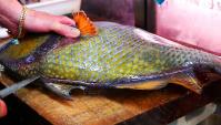 Японская уличная еда - Гигантский Голубопёрый балистод (Видео)
