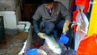 Рынок Куньмин в Юньнань  - Нарезка рыбы (Видео)