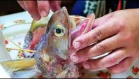 Японская уличная еда - приготовление еды из рыбы змееголова (Видео)