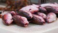 Уличная еда в Японии - Рыба Банан или Банановая рыба (Видео)