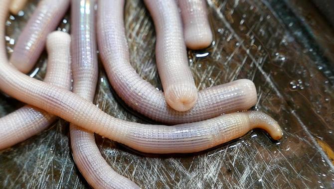 Уличная еда в Китае - морские черви (Видео)
