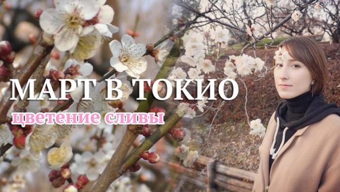 В Токио наступила весна! Чем отличается слива от сакуры? (Видео)