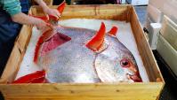 Уличная еда в Японии - Рыба-Луна или Мола-Мола (Видео)