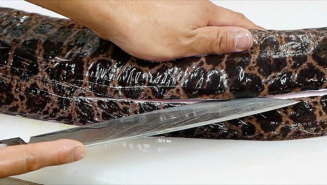 Уличная еда в Японии - Гигантская мурена, разделка и приготовление (Видео)