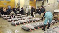 Рыбный Рынок Цукидзи - Аукцион Тунца (Видео)