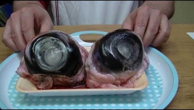 Странная Японская Еда (Видео)