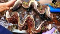 Уличная еда в Японии - Гигантский Съедобный Морской Моллюск (Видео)