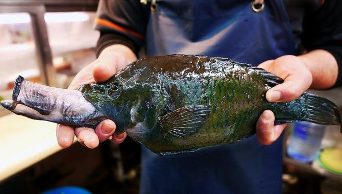 Уличная еда в Японии - Рыба-чужой (Видео)