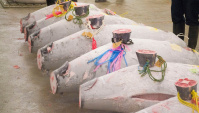 Рыбный рынок в Японии. Что скрывают от туристов?! (Видео)