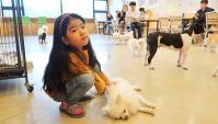 Милое кафе с собачками в Корее (Видео)