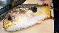 Уличная еда в Японии - Гигантский морской лещ (Видео)