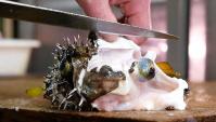 Японская Еда - Рыба Фугу (Видео)