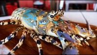 Уличная еда в Индонезии - разделка и приготовление огромного радужного омара (Видео)