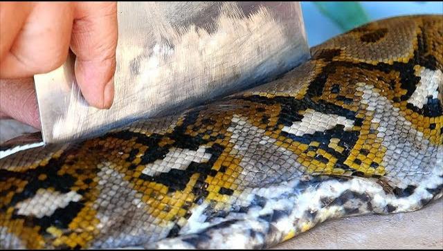 Индонезийская Еда - приготовление блюда из гигантской змеи (Видео)