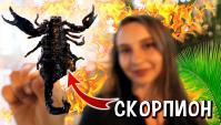 Пробую СКОРПИОНА, насекомых, ночной рынок еды в Таиланде (Видео)