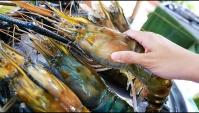 Тайская Еда - Гигантские креветки (Видео)